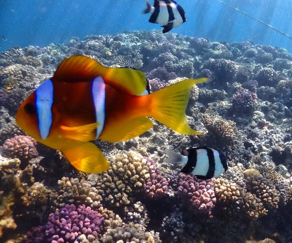 Tauchsafari 2019 Rotes Meer
